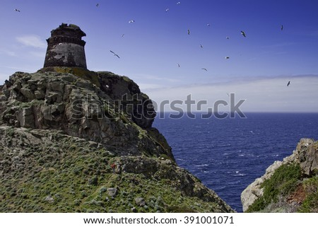 Capraia Island, Arcipelago Toscano National Park, Tuscany, Italy, trekking trail to the tower of Zenobito and Calarossa among arbutus trees, asfodelie flowers and gulls