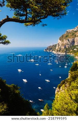 Capri, summer, sun, sea, tree, green - stock photo