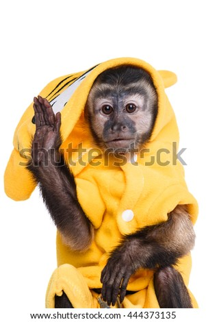 Capuchin monkey on a white background