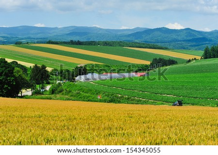 Car and wheat field like patchwork, north of Japan - stock photo
