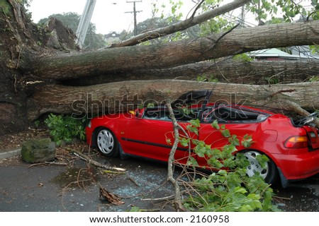 Car Crushed by Tree - stock photo