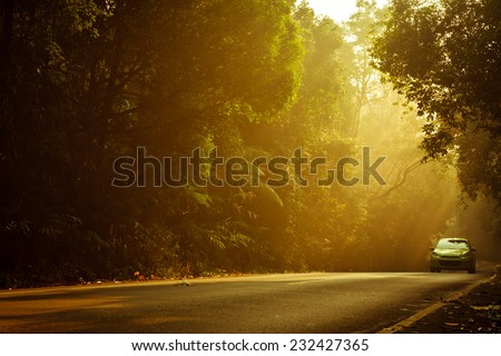 Car on the road in the forest, while warm light falling . - stock photo
