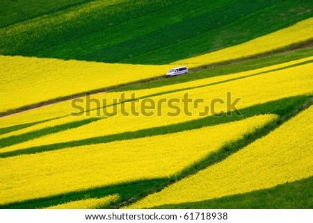 Car run quickly in rapeseed/colza/highland barley fields - stock photo