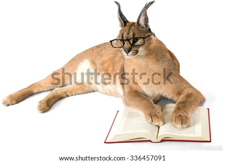 Caracal in Glasses with Open Book - Isolated - stock photo