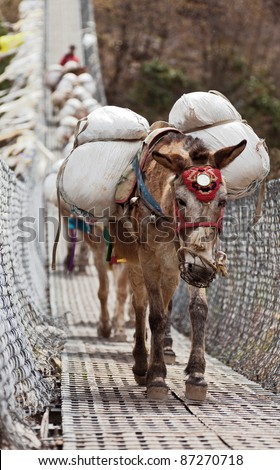 Caravan of donkeys loaded with cross the river on a suspended bridge - Nepal, Himalayas - stock photo