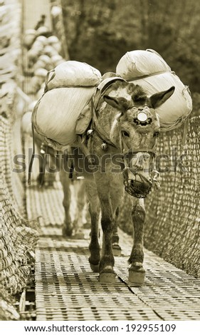 Caravan of donkeys loaded with cross the river on a suspended bridge - Nepal, Himalayas (stylized retro) - stock photo
