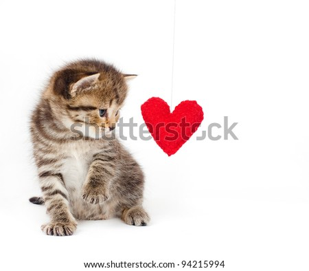Card a kitten on a white background with a heart