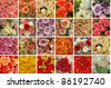 card with color roses - stock photo