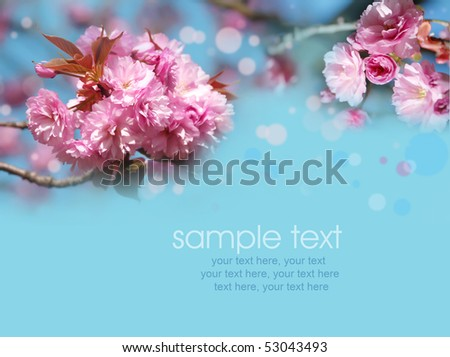 card with spring cherry blossoms and text - stock photo