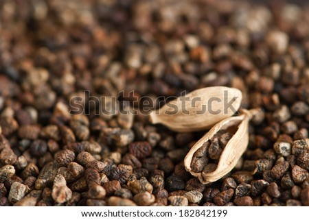 cardamom seeds pods - stock photo
