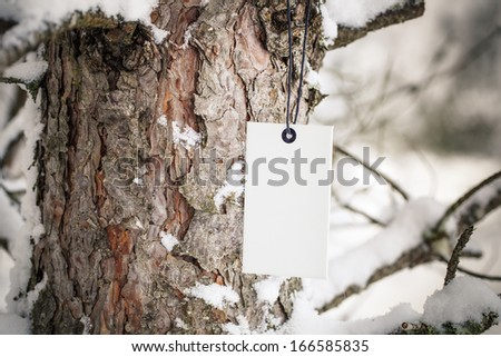 Cardboard label on pine tree in forest - stock photo
