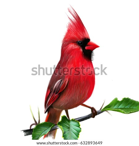 Cardinal In Winter Stock Images Royalty Free Images Vectors