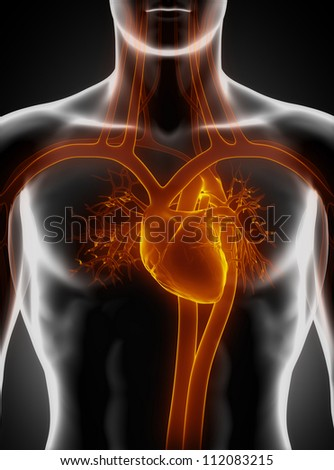 Cardiovascular system with heart     **** Also as footage available in my portfolio