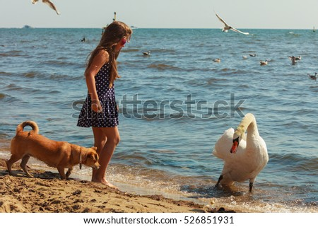 Care and safety of animals. Little girl kid feeding playing with beautiful swan. Child having fun with big white sea bird.