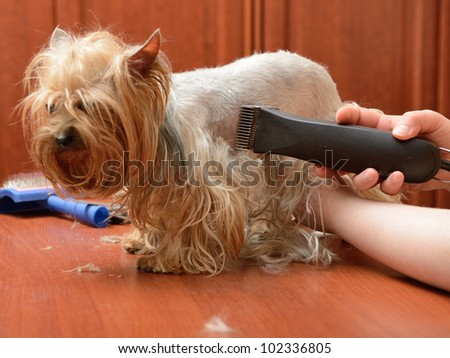 care for dog hair - stock photo