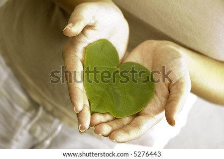 Care for the plants - Isolated hands holding a heart shaped green leaf - stock photo