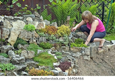 Care over the rock garden in spring