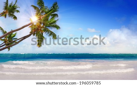 Caribbean beach and  green palms.
