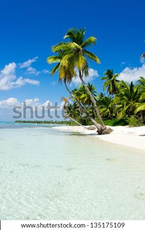Caribbean Beach and Palm tree - stock photo