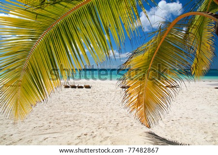 Caribbean beach with palms, paradise - stock photo