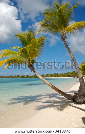Caribbean beach with white sand and coconut palms