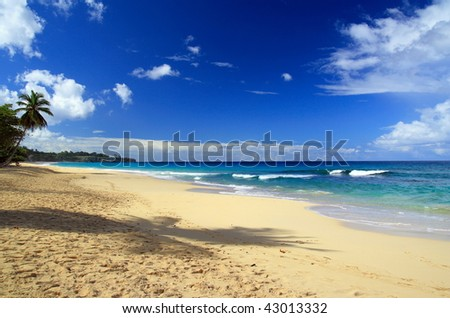 Caribbean coastline with palm