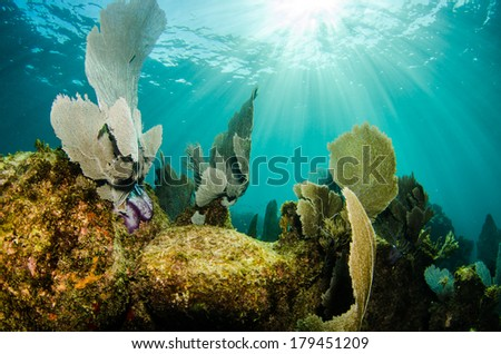 Caribbean coral reefs - stock photo