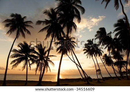 Caribbean. Dominican Republic. Punta Cana. - stock photo