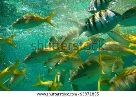 Caribbean Fish - stock photo