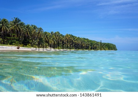 Caribbean island shore with forest of luxuriant coconut trees viewed from water surface, Cayos Zapatilla, Bocas del Toro, Panama - stock photo