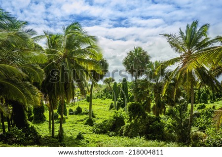 Caribbean jungle with lush green exotic plants, beautiful tall palm trees on blue sky background - stock photo