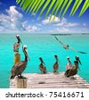 Caribbean pelican turquoise beach tropical sea view Mexico [Photo Illustration] - stock photo