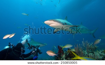 Caribbean reef sharks and underwater photographer - stock photo