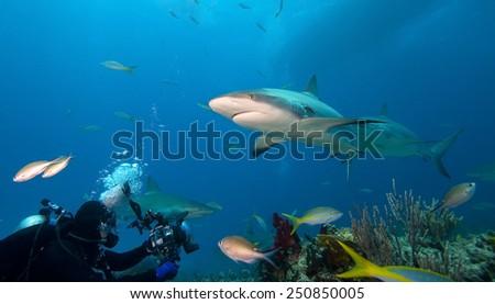 Caribbean reef sharks and underwater photographer - stock photo