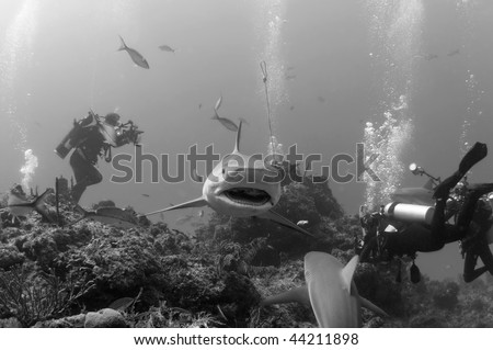Caribbean reef sharks circling around some divers - stock photo