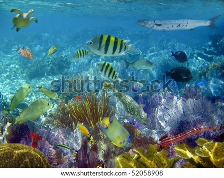 caribbean reef tropical fishes underwater sea view [Photo Illustration] - stock photo
