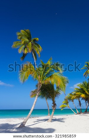 Caribbean scenery with palm trees - stock photo