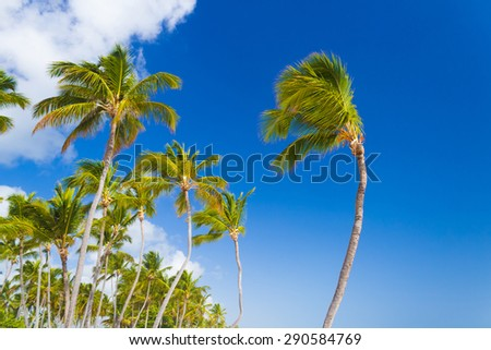 Caribbean scenery with palm trees in Punta Cana, Dominican Republic - stock photo