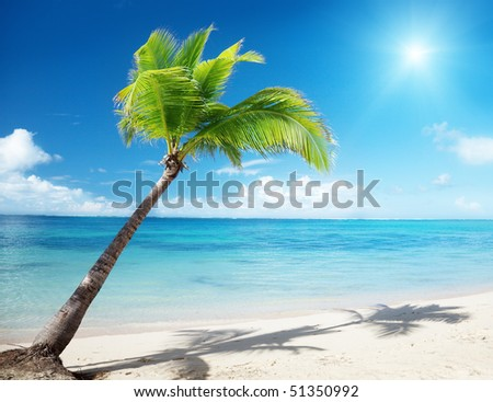 Caribbean sea and coconut palm