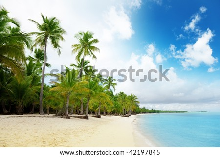 caribbean sea and palms - stock photo