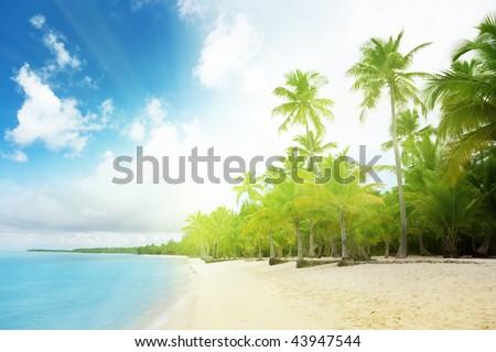 caribbean sea and palms - stock photo