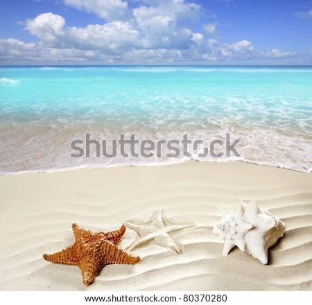 caribbean shell and starfish over wavy white sand beach such a summer vacation symbol [Photo Illustration] - stock photo