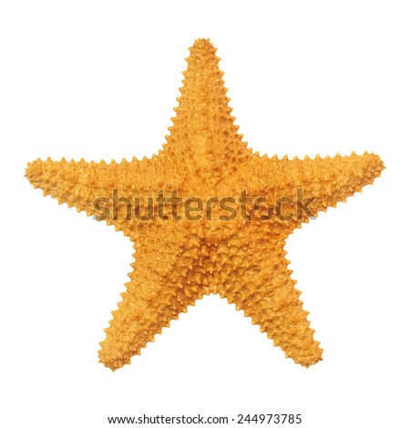 Caribbean starfish isolated on white background. - stock photo