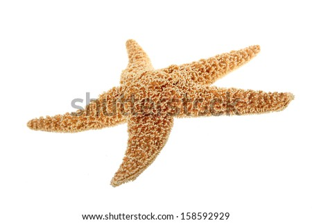 Caribbean starfish on a white background - stock photo
