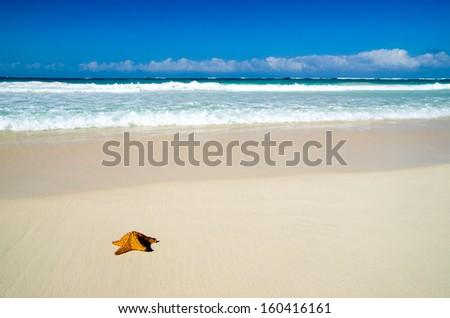 Caribbean starfish over sand beach - stock photo