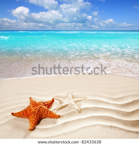 Caribbean starfish over wavy white sand beach such a summer vacation [Photo Illustration] - stock photo