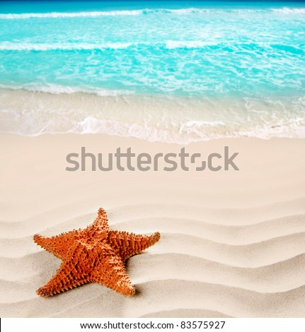caribbean starfish over wavy white sand beach such a summer vacation symbol [Photo Illustration] - stock photo