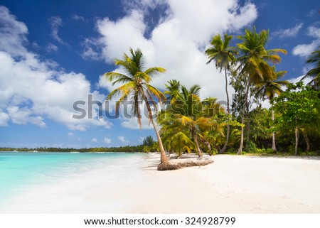 Caribbean wild beach with palm trees in Punta Cana, Dominican Republic - stock photo