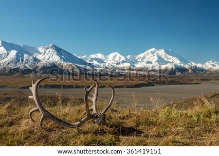 Caribou antlers in front of Denali, Alaska - stock photo