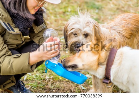 caring about pets.woman feeding two dogs from the plastic drinking cup outside